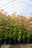 Greenhouse plant nursery, OR. Stock Photography