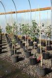 Greenhouse plant nursery, Oregon. Royalty Free Stock Photos