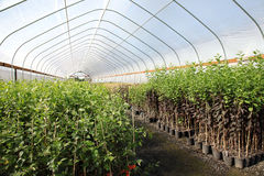 Greenhouse plant nursery, Oregon. Royalty Free Stock Images