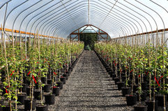 Free Greenhouse Plant Nursery, Oregon. Stock Photos - 20279713