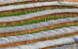Greenhouse Plant, Royal Project , Doi Inthanon Royalty Free Stock Image