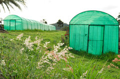 Greenhouse plantation Royalty Free Stock Photo