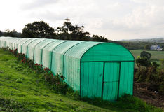 Greenhouse plantation Royalty Free Stock Images