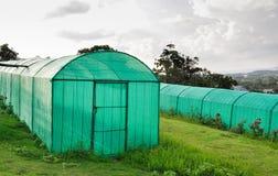 Greenhouse plantation Stock Images