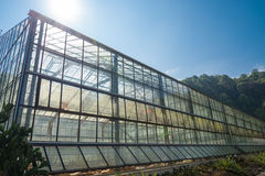 Greenhouse plantation Royalty Free Stock Photography