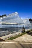 Greenhouse plantations Royalty Free Stock Image