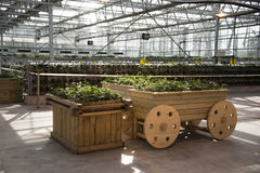 Greenhouse. The greenhouse planting organic pollution-free vegetables Royalty Free Stock Images