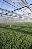 Greenhouse Plants Stock Photos