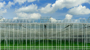 Greenhouse. With plants Stock Image