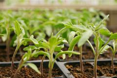 Greenhouse Plants Stock Images