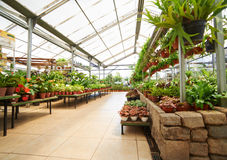 Greenhouse with plants in garden center Royalty Free Stock Photography