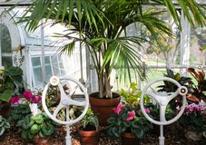 In the greenhouse - plants sit in window of conservatory with two victorian wheel cranks to open windows and a view of outside stock images