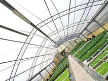 Greenhouse with plants view from different angle. Greenhouse with green plants view from different angle Royalty Free Stock Photo