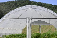 Greenhouse with plastic film which raised early tomatoes peppers stock photo