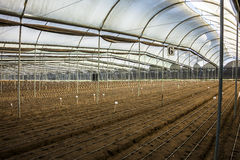 Greenhouse ready for flower seeds Royalty Free Stock Images