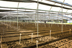Greenhouse ready for flower seeds Stock Image