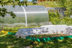 Greenhouse and  seedbed  in the vegetable  garden. Royalty Free Stock Images