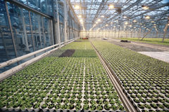 Greenhouse with seedling spring Stock Images