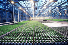 Greenhouse with seedling spring Stock Image