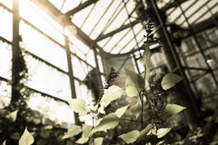 Greenhouse sepia Royalty Free Stock Photos