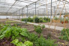 Greenhouse with several small vegetable gardens Stock Image
