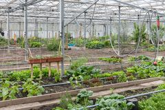 Greenhouse with several small vegetable gardens Royalty Free Stock Images