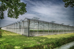 Greenhouse with strawberries Royalty Free Stock Photo
