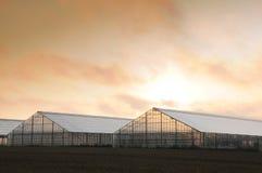Greenhouse sunrise 2 Stock Photos