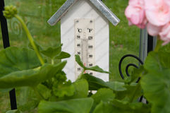 Greenhouse termometer Stock Image