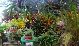 Greenhouse full of tropical plants. Greenhouse in the terrace of a house in the countryside of Cuba. It`s plenty of tropical plants with a lot of colors and Stock Images