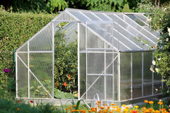 Greenhouse with tomato plants Royalty Free Stock Images