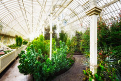 Greenhouse. Traditional greenhouse with plants and foliage Stock Image