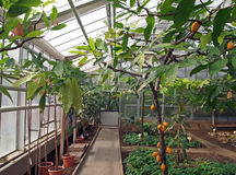 Greenhouse for tropical crop plants Royalty Free Stock Image