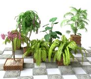 Greenhouse with Tropical Plants Royalty Free Stock Photography