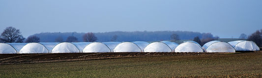 Greenhouse tunnel from polythene plastic on an agricultural field, panorama format. Greenhouse tunnel from polythene plastic on an agricultural field, long stock photos