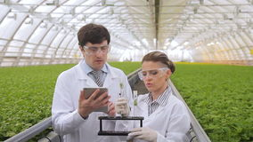 In the greenhouse, two experts look at the test tubes with greens. stock footage