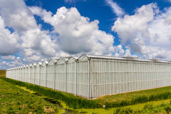 Greenhouse under a summer sky stock image