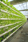 Greenhouse vegetable cultivation without soil Stock Photo