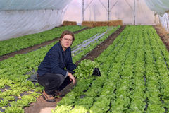 Greenhouse Vegetable Grower. Organic farmer holding tray of seedlings in greenhouse Stock Photo