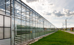 Greenhouse vegetable production Royalty Free Stock Photo