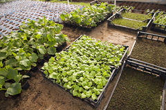 Greenhouse for vegetables - cucumbers Stock Image
