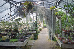 Greenhouse View Royalty Free Stock Photo