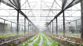 Greenhouse watering system in action stock video