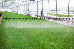 Greenhouse watering system in action Stock Photography