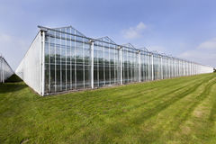 Greenhouse. In Westland in the Netherlands Stock Photos