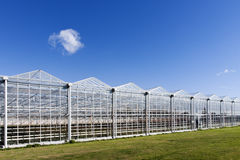 Greenhouse in Westland in the Netherlands. Greenhouse in the municipality Westland in the Netherlands Stock Photo