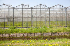Greenhouse in Westland in The Netherlands. Near the Hague in the province Zuid-Holland Royalty Free Stock Images