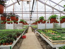 Greenhouse in winter Stock Image