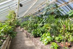 Greenhouse With Tropical Plants In Berliner Botanical Garden Stock Image