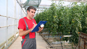 Greenhouse Worker Royalty Free Stock Photo